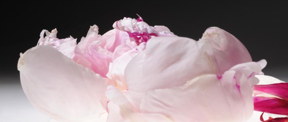 Flower_2804-940x400.jpg